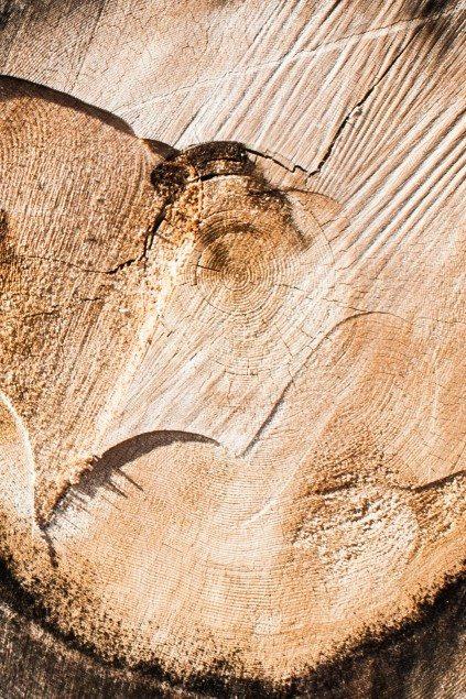 tipi di legno-2
