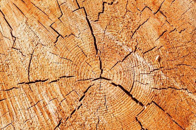 tipi di legno-3